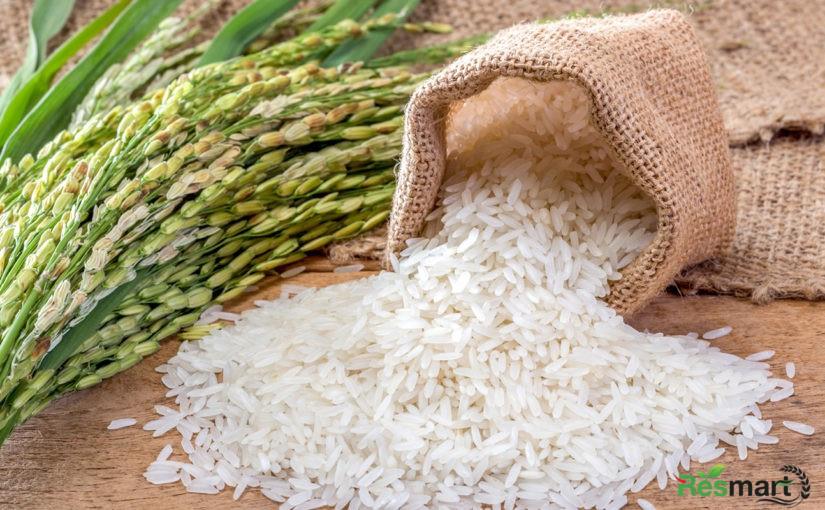 Top 8 nơi bán gạo ST25 Hồ Quang Cua uy tín TPHCM