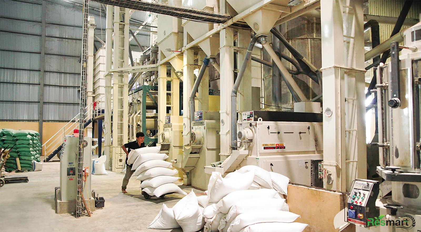 Top các công ty xuất khẩu gạo lớn nhất miền Bắc