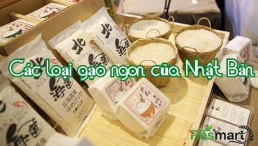 Top 5 Các loại Gạo Ngon của Nhật Bản, thơm ngon dẻo