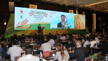 Sản lượng Xuất khẩu gạo Việt Nam đứng thứ mấy thế giới 2020