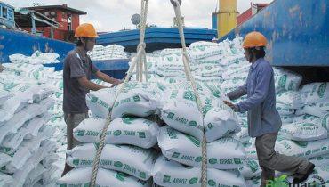 Thủ tục và quy trình xuất khẩu gạo bằng đường biển